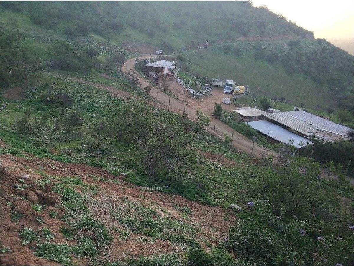 camino el roto chileno (comunidad ecológica)