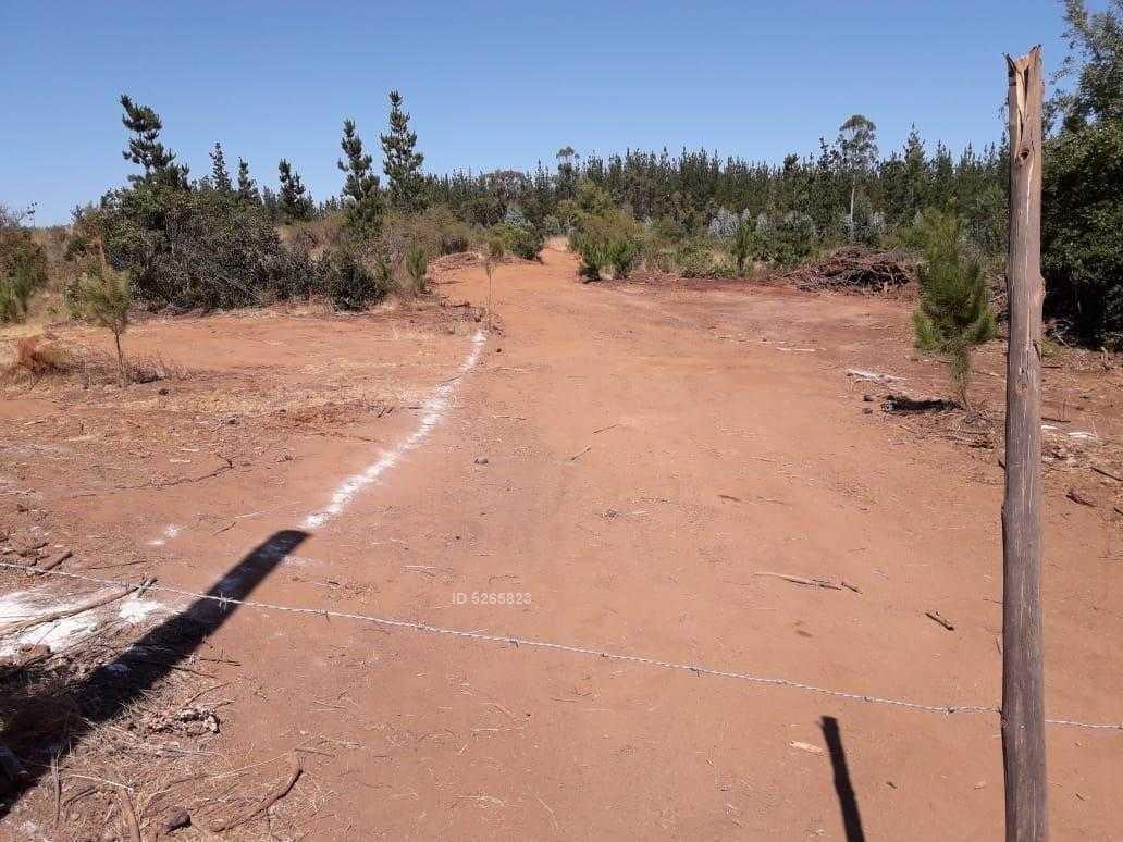 camino publico a 10 km de vichquen, el desvió ( el brujo), camino a rarin,