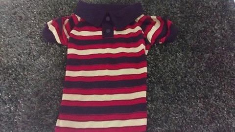 camisa polo para cachorro roupas pet 8 ao 13 pit bill