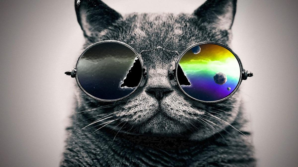 daa0bdf843712 Camisetas Gato Com Oculos