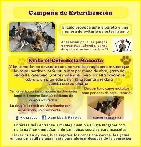 campaña para canes y gatos