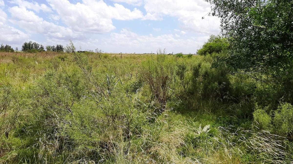 campo 10 has. agricola coneat 175 con arroyo