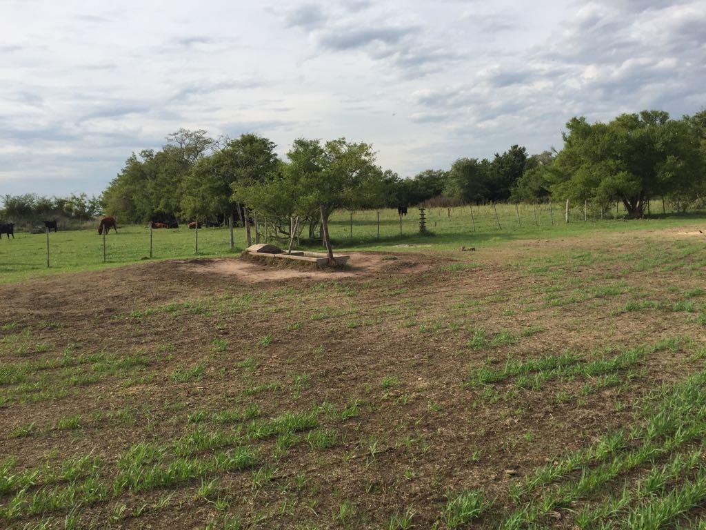 campo- 133 hectareas sobre ruta 2 km 185-bien armado