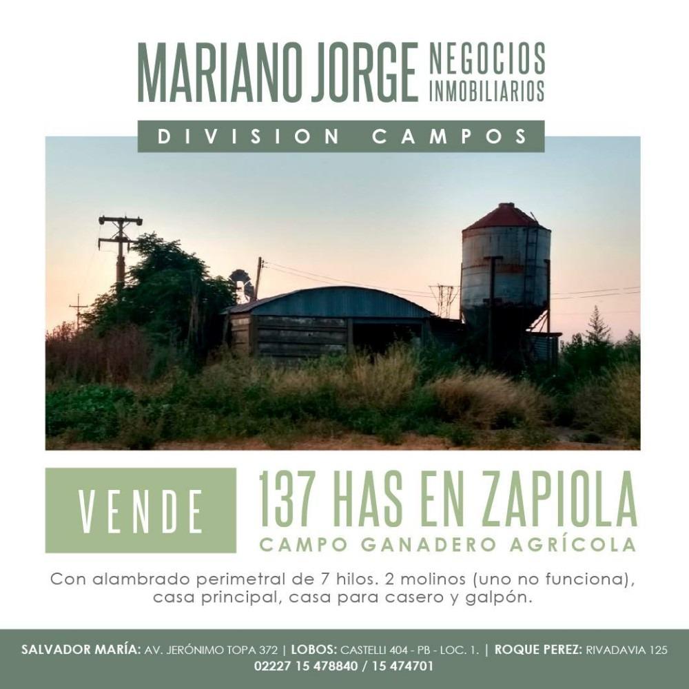 campo 137 has - agricola ganadero - zapiola - lobos