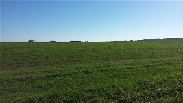 campo 142 hectáreas en cerros de san juan. ref: 1.007
