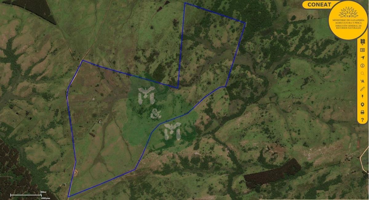 campo 143 ha - uruguay - paraje las espinas