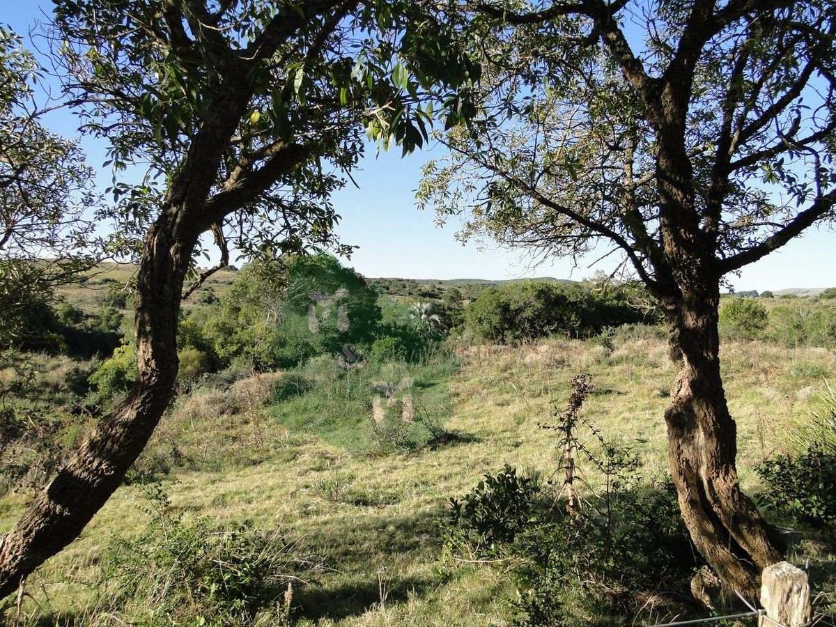 campo 143 ha - uruguay (ruta 9)