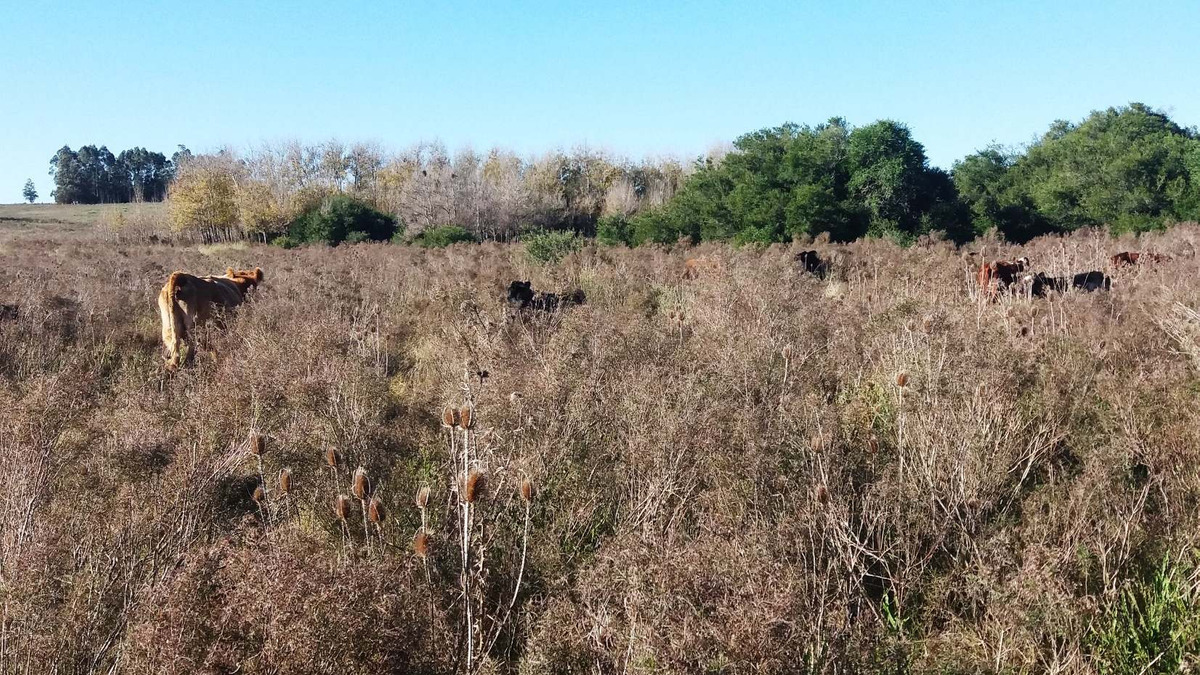 campo 30 hectareas en ruta 11 tapia canelones
