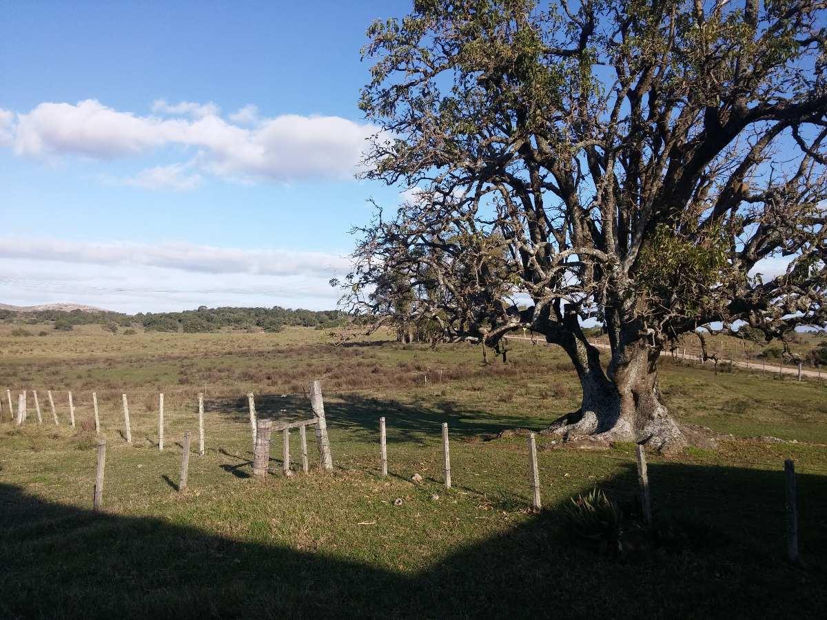 campo 344 hectáreas con casco antiguo de estancia