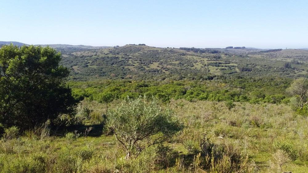 campo 35 hás sierras de caracé maldonado ideal viñas-olivos