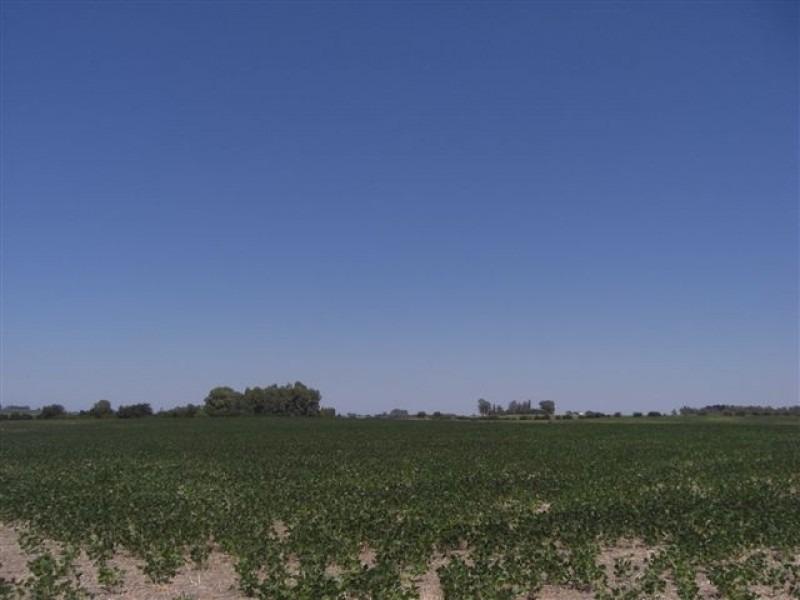 campo 36 hectáreas, departamento de colonia. ref: 1.001