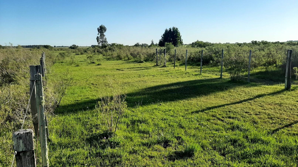 campo 365 hectareas con monte 100has eucaliptos