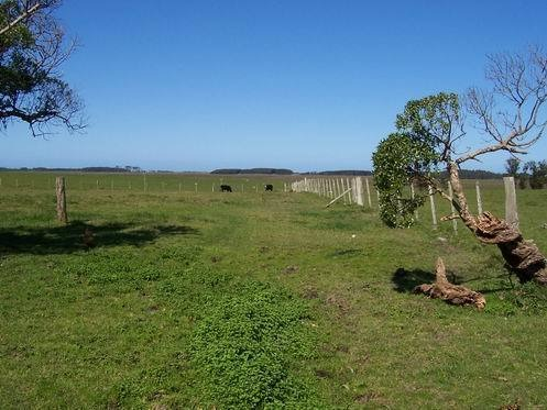 campo 386 ha - rocha - uruguay ruta 9