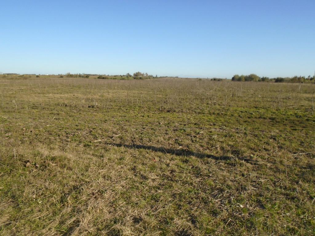 campo 50 has. agricola ganadero