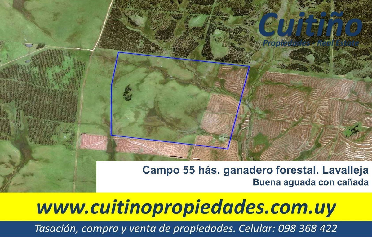 campo 55 has. ganadero forestal lavalleja