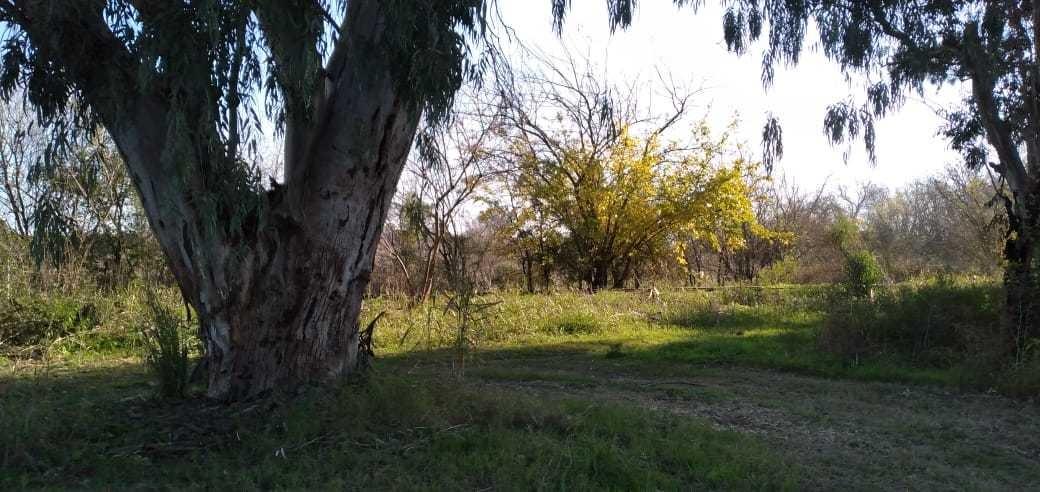campo 5.5 hectáreas a metros de ruta 39 pavón