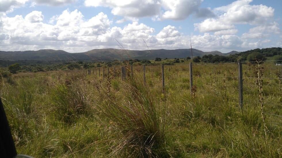 campo 6 hectáreas en sierra los rocha