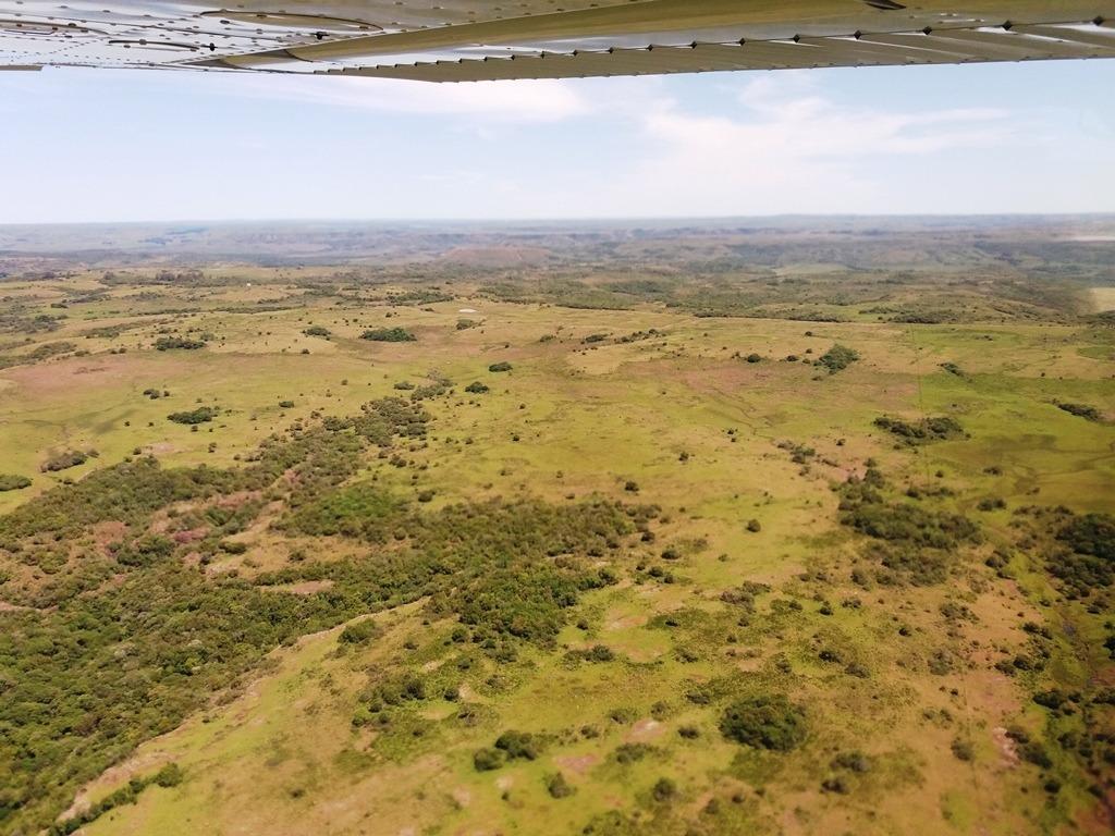 campo 6.700 has. campo ganadero forestal