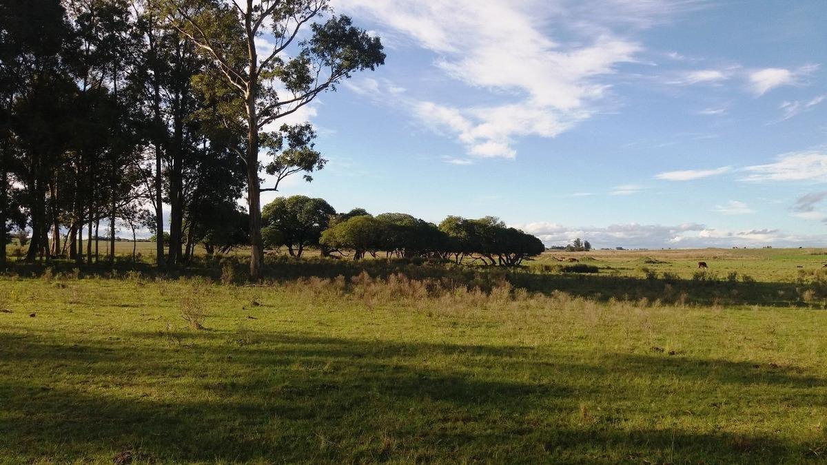 campo 7 hectareas buen suelo para agricultura