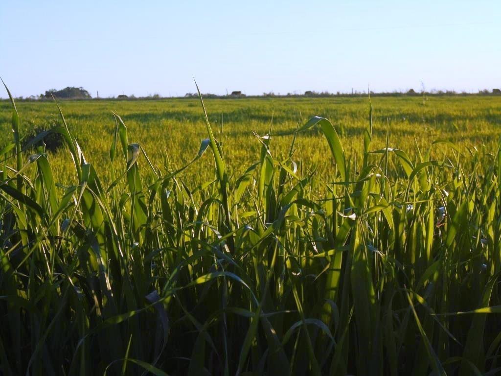 campo 9 has buena tierra agricola, acceso y ute