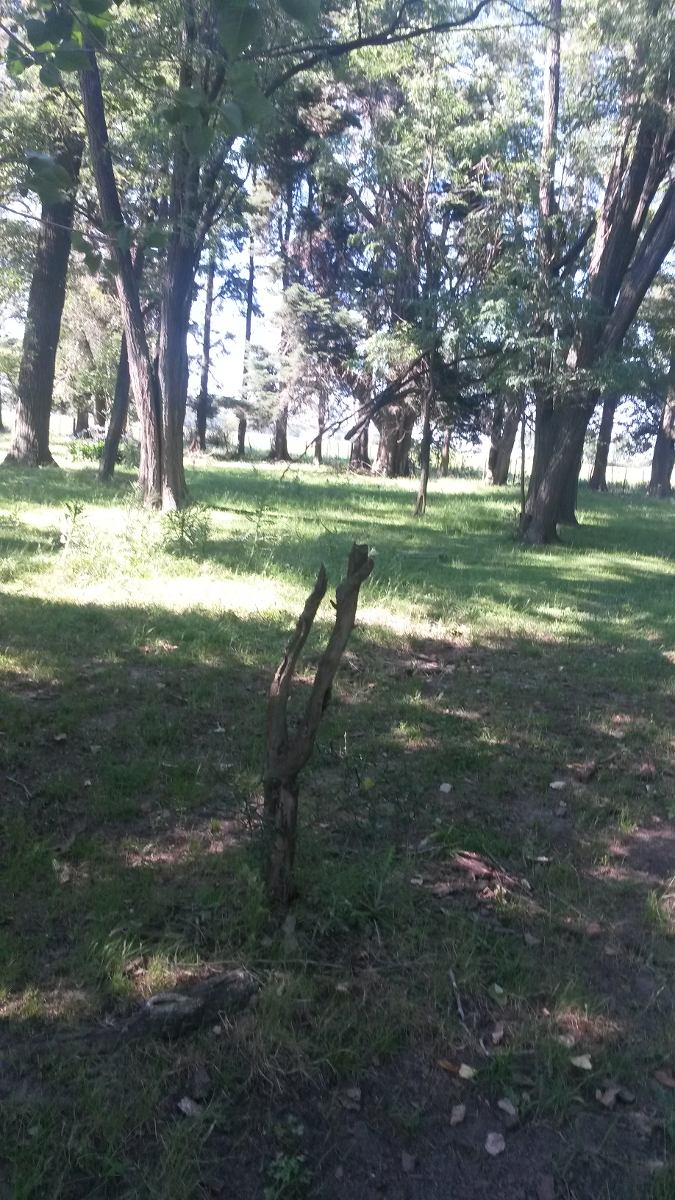 campo 9 hectareas km 10 a 300 mt de  ruta 24 c/escrit