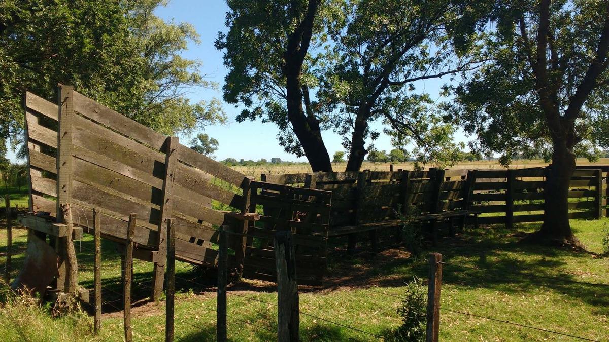 campo 95 has ganadero - roque perez