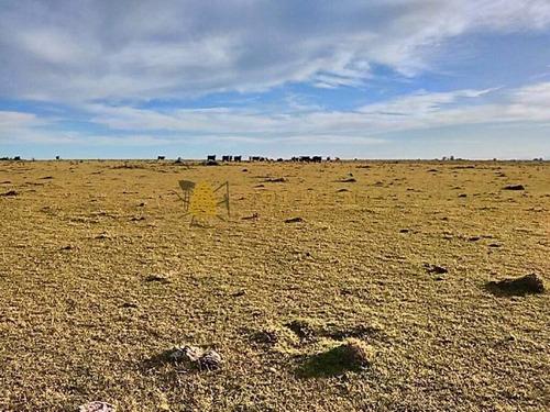 campo a 32 km de punta del este - ref: 490