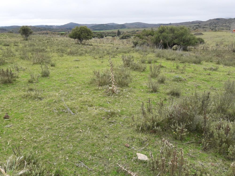 campo a 5 kilometros de minas