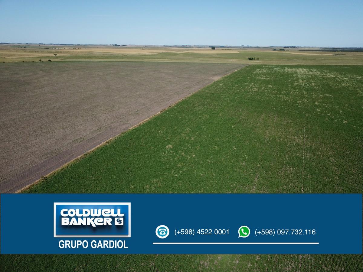 campo agricola 118 has soriano. puntas de tala