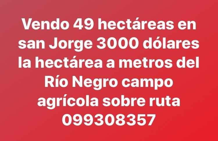 campo agrícola 49 hectáreas en san jorge  3000 dólares hecta