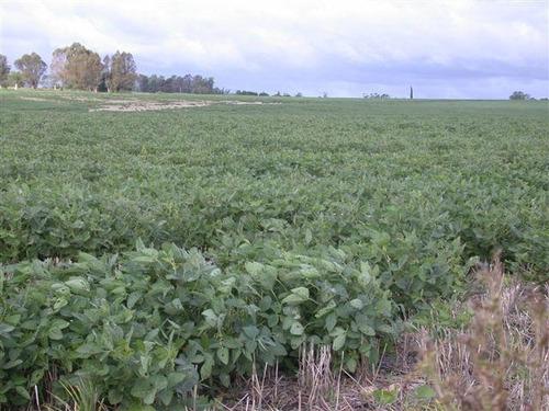 campo agrícola, 548 hectáreas sobre ruta
