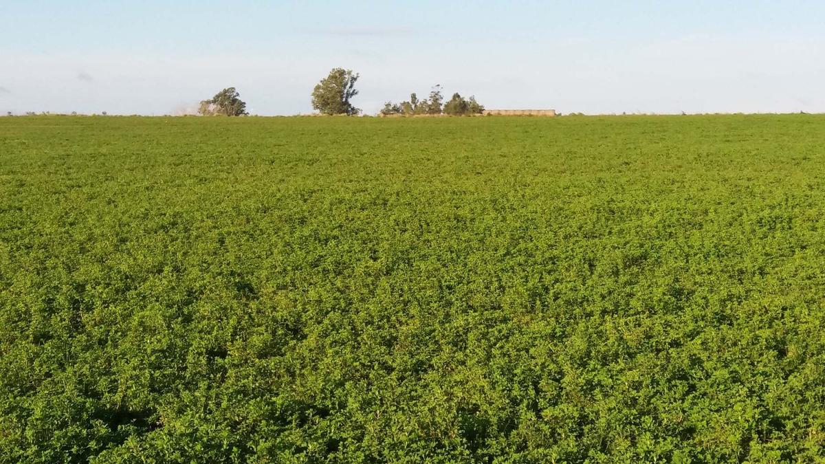 campo agrícola 64 has. coneat promedio 148