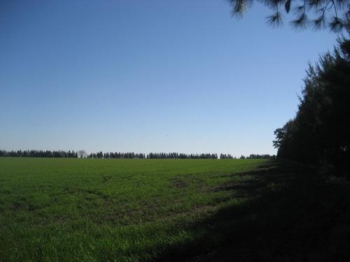 campo agricola a metros de ruta