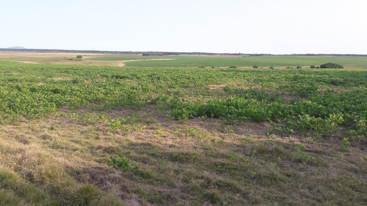 campo agrícola en canelones