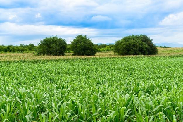 campo agrícola en venta en general cabrera córdoba
