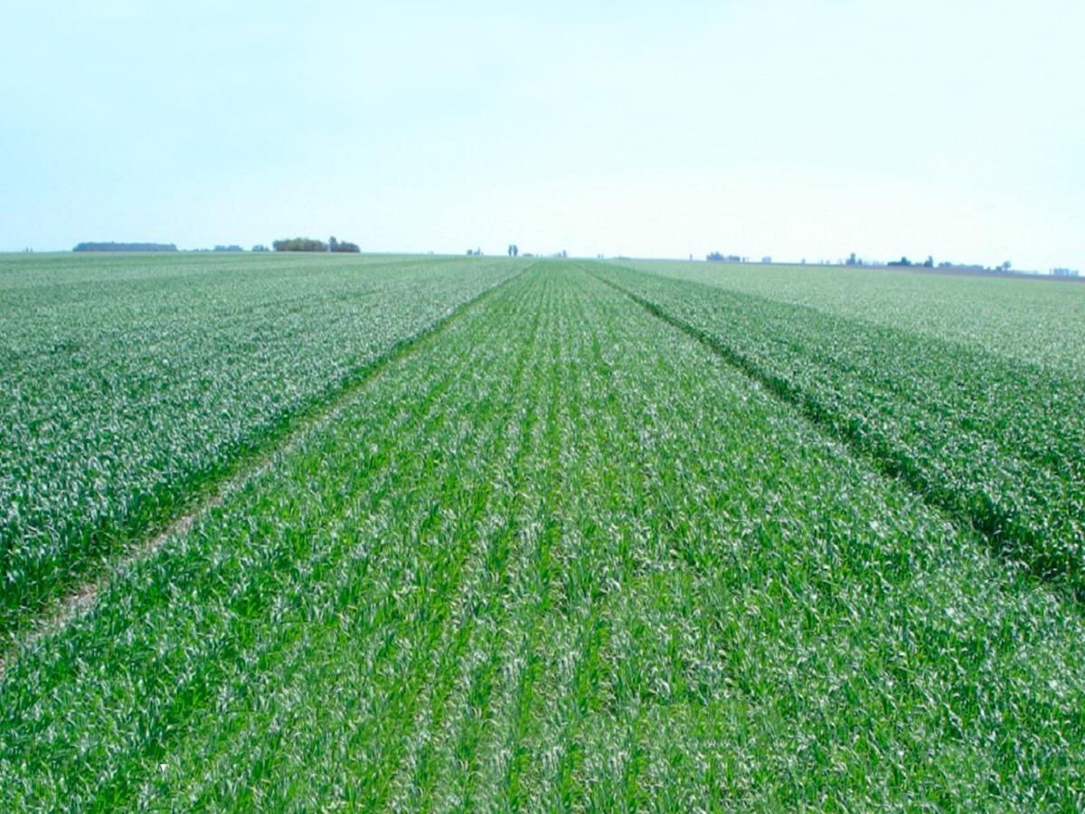 campo agrícola en venta en río negro ref. 2070