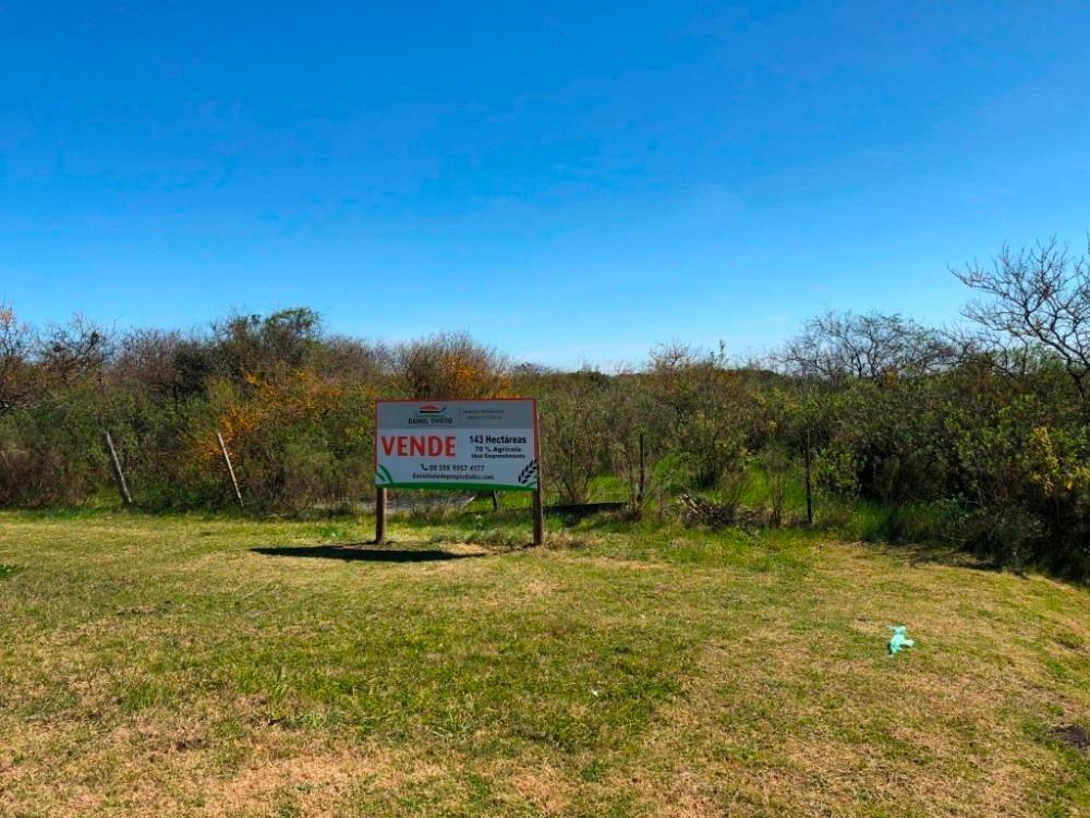 campo agrícola - ganadero de 143 hás en venta, conchillas.