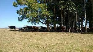 campo agricola - ganadero en charqueada