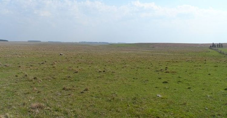 campo agrícola ganadero en durazno ref.: 2623