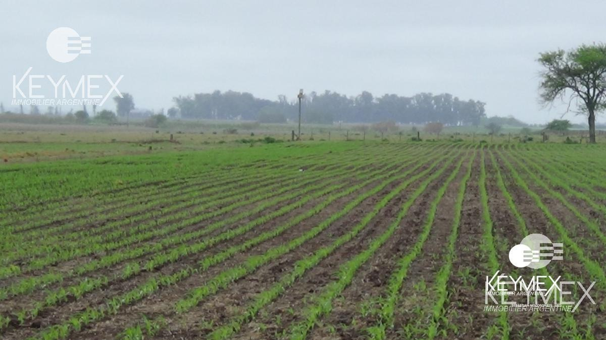 campo agrícola suelo i - pergamino