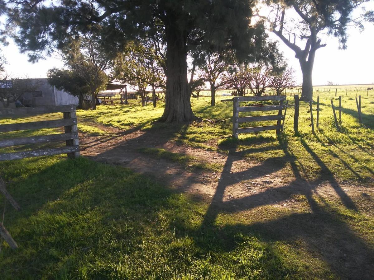 campo - barrancas