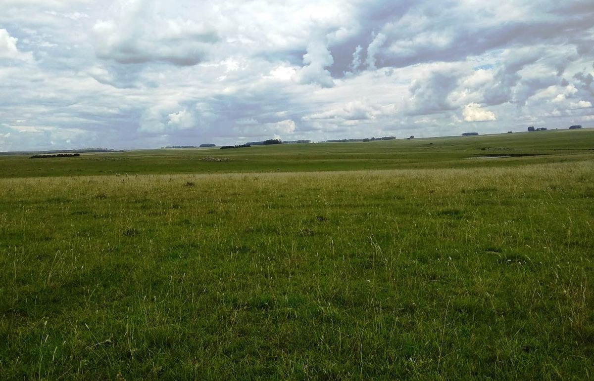 campo bueno ganadero 387 has en cerro largo