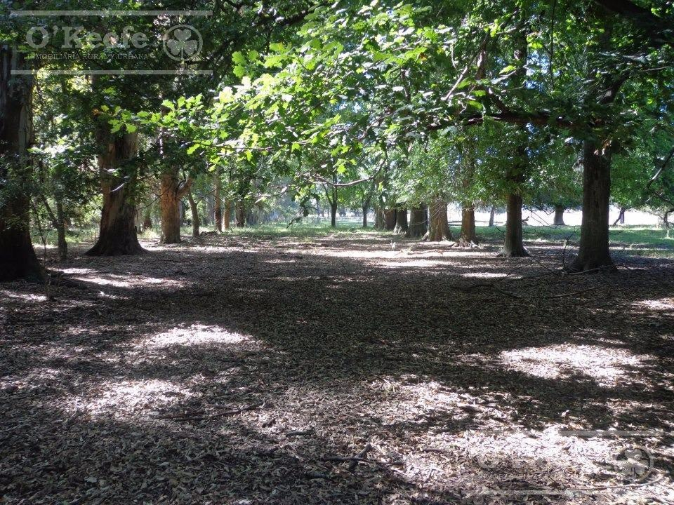 campo - campos cañuelas