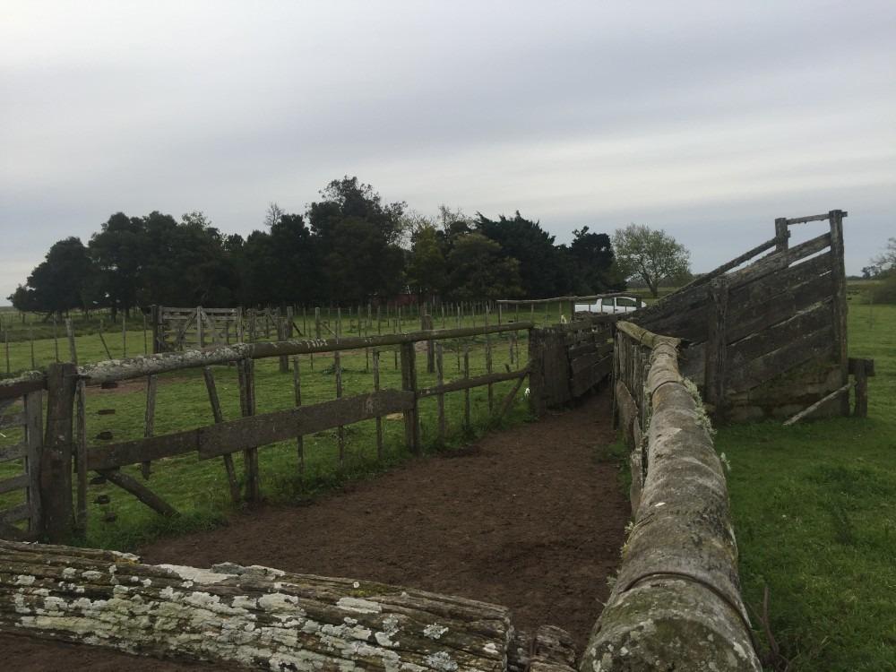 campo castelli 84has