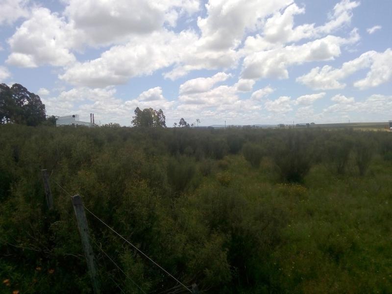 campo , chacra, cerca de la ciudad de treinta y tres, se puede fraccionar terreno - treinta y tres