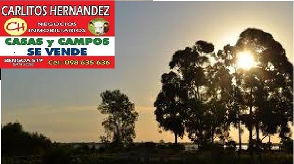 campo cn casa 100 has paysandu con arboles cultivo de olivos