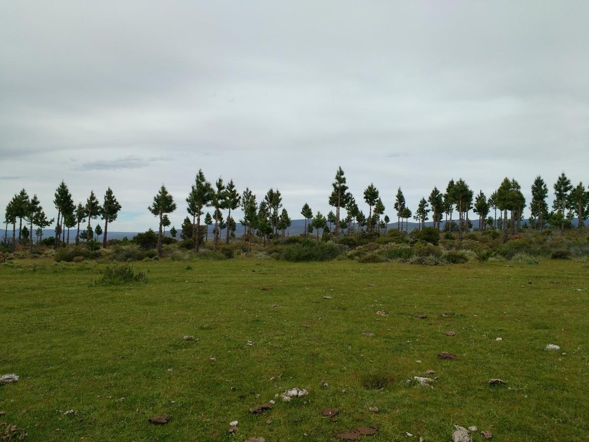 campo con aptitud forestal, esquel, chubut