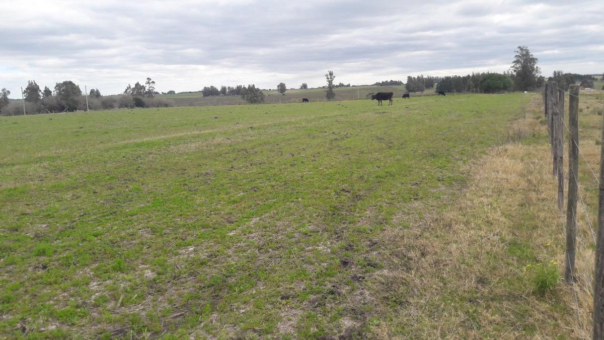 campo con luz, arroyo al fondo, pradera, en lugar tranquilo
