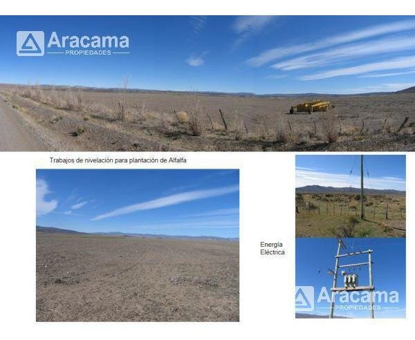 campo - costa chubut