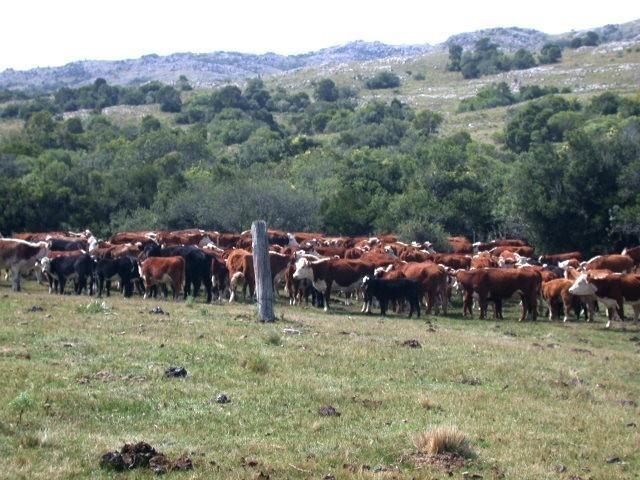 campo cría -forestal- olivos- turísitco,  2500 hectáreas sobre el pueblo grazón